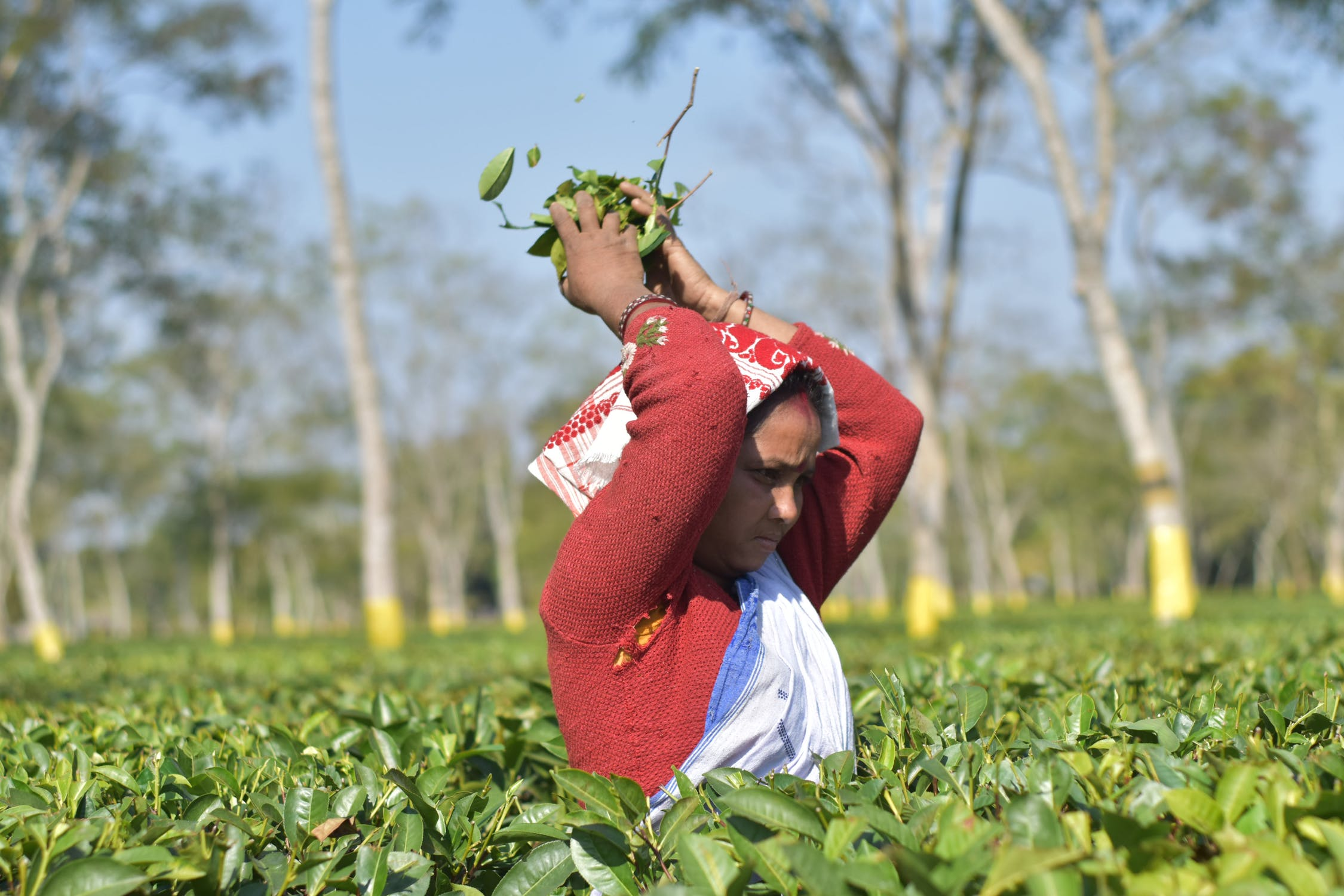 Nearly 2 million people in Assam, a state in northeast India known internationally in part for its tea plantations, have been left off a register of citizens meant to exclude illegal immigrants. Photo by  Dwijen Mahanta .