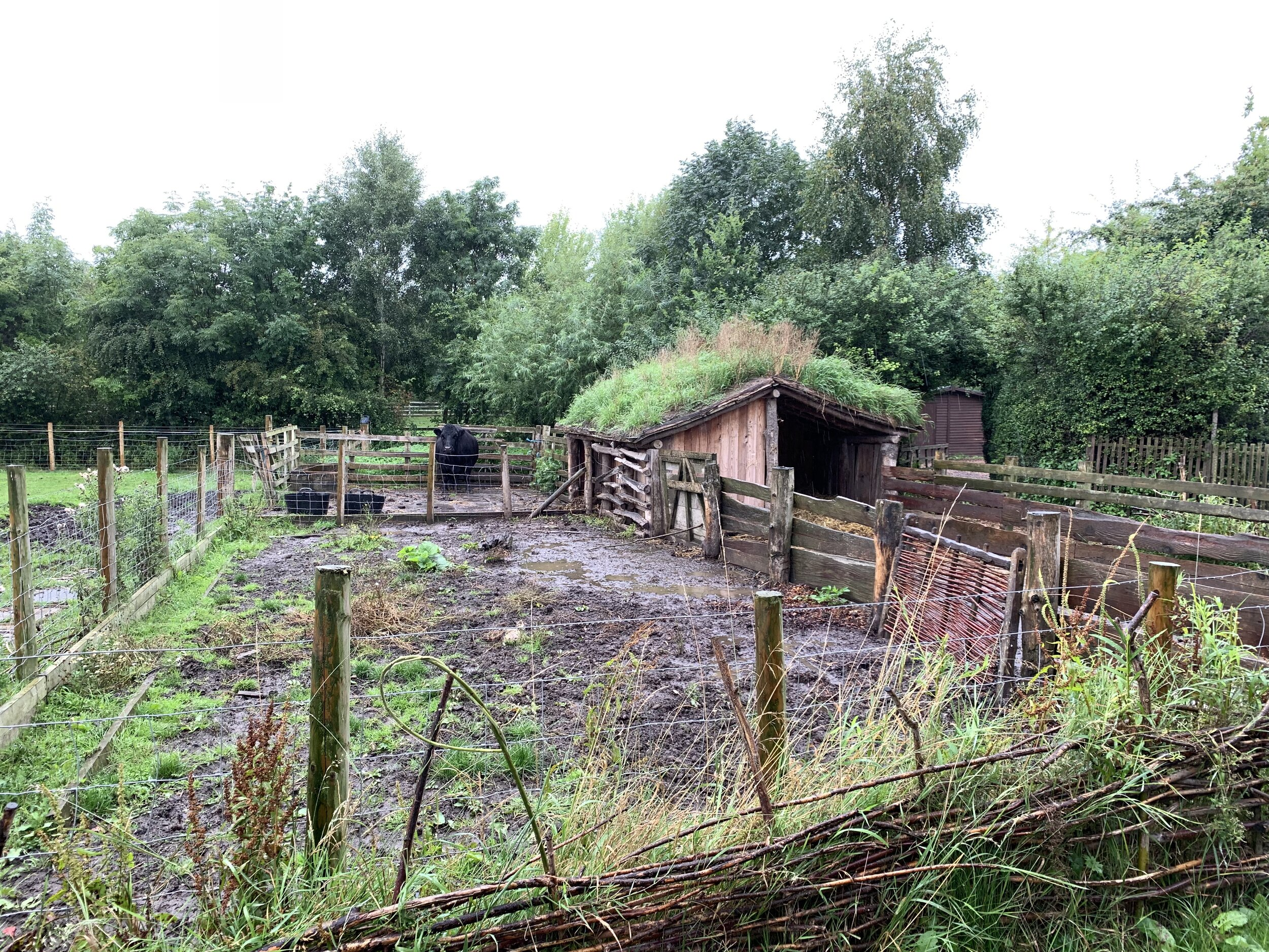 A typical Anglo-Saxon farm maintained at the Bede Museum in Jarrow, England. Photo by Roberta Ahmanson.