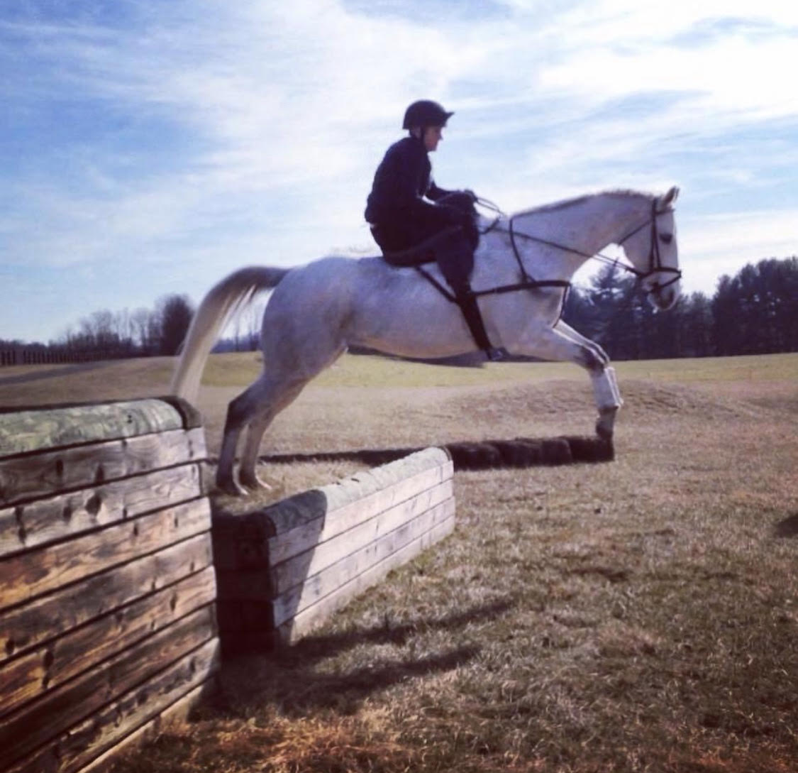 "Rider : Sarah Hansard   Hometown : Charles Town, WV   Horse : ""Superstar"" (Hereosaurus Rex, barn name Hero) -- 7 yr old, gray, OTTB gelding (Heres Zealous x Merrill-Forest Camp), owned by Cherry Blossom Farm. Hero raced on the flat until late 2016, and then was re-schooled and he has been foxhunting the 2017-2018 season.   Sarah's Background : I am a laboratory technician. I started sidesaddle with Devon Zebrovious in the fall of 2016, and have been hooked ever since!   What is your racing experience, side saddle or otherwise? : I raced aside last year on the flat, riding King of Hearts, and we were the SSCF Reserve Champion Flat race horse. I cannot wait for this year!   Do you fox hunt? Do you hunt aside? : I am a member of New Market-Middletown Valley Hunt (MD) and have hunted at various other hunts as well, both aside and astride.   What got you interested in racing aside? : Devon Zebrovious and the pictures of all the lovely ladies.   What are your side saddle goals for 2018? : To help promote the SSCF and get more people interested and involved. The foundation has given me every opportunity to learn, grow and succeed and I want others to experience how much fun it is!"
