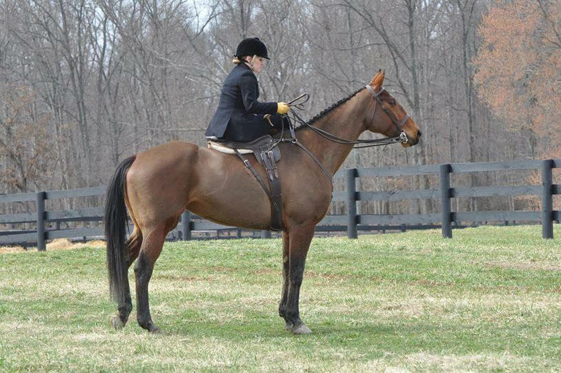 "Rider : Maggie Johnston   Hometown : Middleburg, VA   Horse : I'm so lucky to have ridden so many horses in SSCF events including Cattywampus, Riot's Maeve, Paddy Mac, Beulah (owned by Marcie Michael) and Zahara (owned by Tania Woerner). Before the SSCF was founded, I rode several horses aside include IdleHour Savanna (pictured), Skye, Theodore and Connor. They are all very different, which I love: a TB, an Irish Sporthorse, several draft crosses and two part bred Cleveland Bays.   Maggie's Background : I work at BCT Bank in Middleburg, VA as a teller & customer service representative. I've ridden aside for more than 10 years and have ridden since I was 4, so almost 55 years :)   What is your racing experience, side saddle or otherwise?:  I raced in the flat races at Oatlands at our first race. I love to hunt and hunter pace. I've shown in and around Loudoun County VA and in Maryland including at The Upperville Horse & Colt Show. I've also show at The Aiken Show in The Hitchcock Woods, which I think is the most elegant show venue in the Country. I've also given demonstration rides in Lexington KY.   Do you fox hunt? Do you hunt aside? : I do hunt and I love to hunt aside! The day I was awarded my colors with the Snickersville Hounds (VA), I was riding aside on Skye which was a very special day. I hunt in Virginia, Maryland, South Carolina, New York and have hunted in Ireland and France. My future fox hunting goals include hosting a first-ever drag hunt in Virginia.   What got you interested in racing/foxhunting/hunter pacing aside? : During our trip to Ireland to hunt with County Meath, and to set a world record for the largest group of women hunting aside, Devon and I learned about the Dianas of the Chase race. We thought that it would be wonderful to hold a side saddle race in the US, so we set out to hold a first-race in Loudoun County, VA. From there it's grown to what is now a Foundation and seven scheduled races this year plus clinics, hunts and a gala. We've added awards for riders who hunt and hunter pace aside and award our riders at the National Sporting Library & Museum in Middleburg VA. As we say ""it's a return to elegance"" and anyone watching our riders at the point to point races, at hunts and at hunter paces always remark at how wonderful it is to have riders upholding a traditional way of riding.   What are your side saddle goals for 2018? : I would like to grow the hunter pace and hunting division of our Foundation. There are so many riders who ride aside but have not yet hunted or hunter paced aside. Both help to financially support hunting, as does point to point races, so introducing riders to the sport of fox chasing will help hunt clubs grow. There are several exciting sidesaddle events being hosted in and around Middleburg and the Foundation is honored to be included."