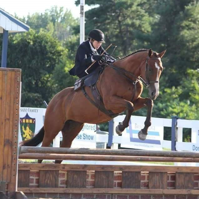 "Rider : Julie Nafe   Hometown : I was born in Chester County, PA, before moving to the Main Line and eventually to my current home in Berks County, PA.   Horse : ""McCrady's"" (Cradle) (KY) - (Yankee Gentleman x Stars Street) 9 yr old, bay, OTTB mare, owned and trainer by Lauren Schock of Red Hound Stables in West Chester, PA. She ran 18 starts on the flat track before retiring to a life of fox hunting, showing, and side saddle. This mare takes more pride in her work ethic then anything I have sat on before and I am truly privileged to work with such an astoundingly brilliant animal as her.   Julie's background : I spend most of my time outside gardening, deer hunting, fostering and re-homing kittens, or just on the farm. If I am not outside I am working second shift in nursing, or at a computer working on my degree for medical billing and coding and insurance reimbursement. I rent a small private farm near by my house where I keep 6 horses from thoroughbreds to paint/quarter horse crosses, with which I do various disciplines from fox hunting, western, side saddle, driving, jumpers, hunters or breaking babies. I have been riding since I was a kid. Riding off the track thoroughbreds in the hunter ring and paperchases, which led me to fox hunting at an early age of eight. I was introduced to the unique discipline of side saddle in 2015 by Susan Sisco.   What is your racing experience, side saddle or otherwise? : By 14, I purchased my first pony for point to point racing. I spent a lot of time racing flat races, field master chases, fox hunter races and helping my trainer break and train thoroughbreds for the flat track. When I was not racing I drove my race pony in a single meadow Brooke carriage, fox hunted or anything that kept me on a horse.   Do you fox hunt? Do you hunt aside? : I am not sure what I would do without fox hunting! During the season I hunt two to three times a week if possible by my work or weather. My first and still attended hunt was with Gabel-Swisher hounds, but frequent River Hills Hounds, and on occasion Kimberton hunt. I hunt aside very often and most holiday hunts, usually on my race/driving/ side saddle paint pony or Cradle.   What got you interested in racing/foxhunting/hunter-pacing aside? : After doing a few local shows I was invited to race in the Mr. Stewart's Cheshire fox hounds point to point race which led me to hunting aside in prep for the races. Since the first race I have embraced riding side saddle cross country.   What are your side saddle goals for 2018? : I have been working hard to fix a few bad habits I picked up when first starting side saddle so for 2018 I would like to race every sscf side saddle race and finish off the spring/summer with my first aside ride in the Dixon ovel at Devon. Most importantly, have fun and enjoy this beautiful discipline!"