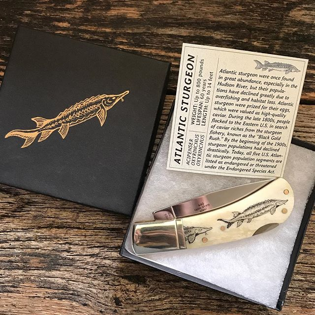Larissa scrimshawed this Atlantic Sturgeon knife as a sweet-ass Secret Santa gift for her cousin 😻