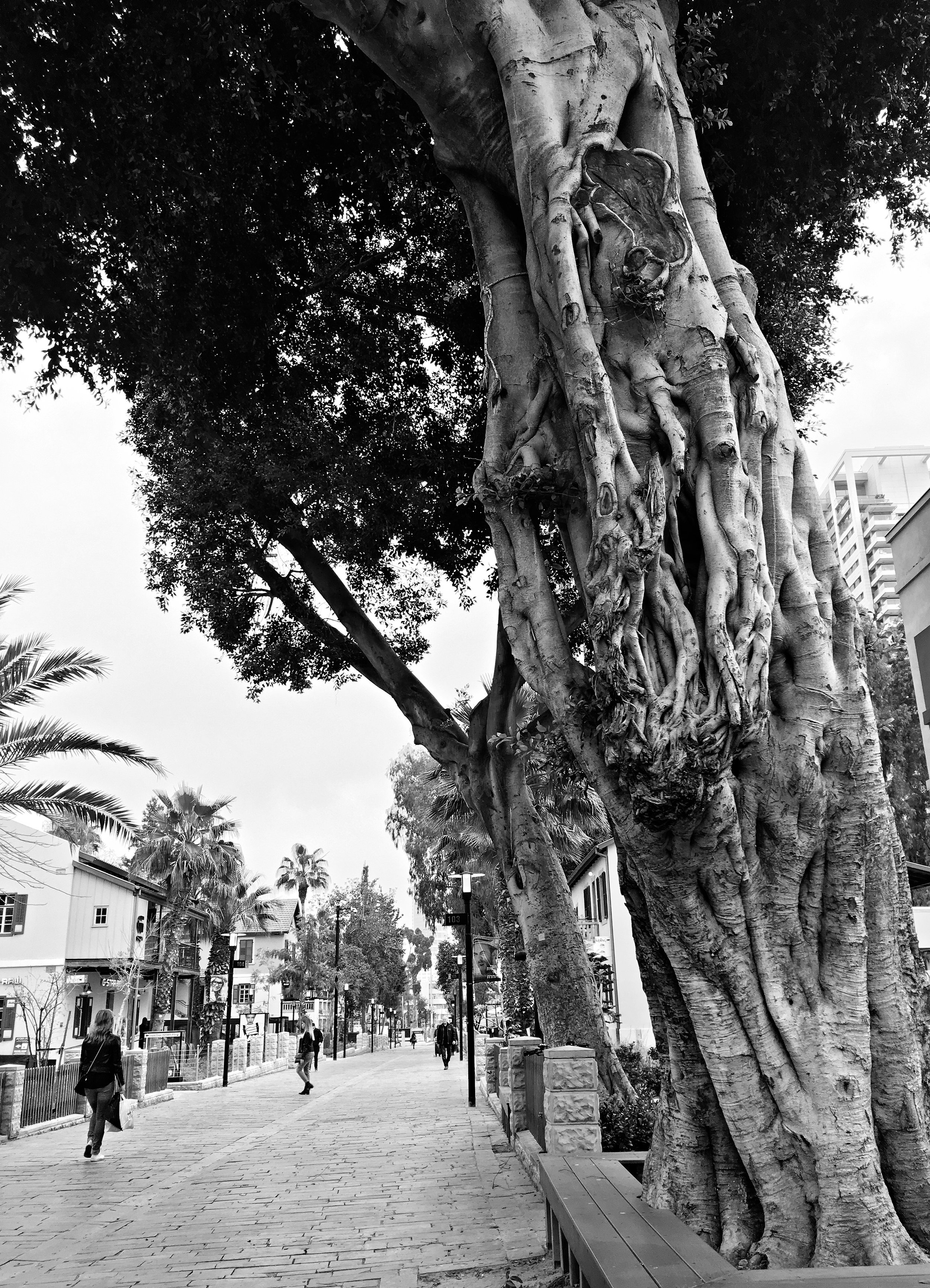Tel Aviv German Colony