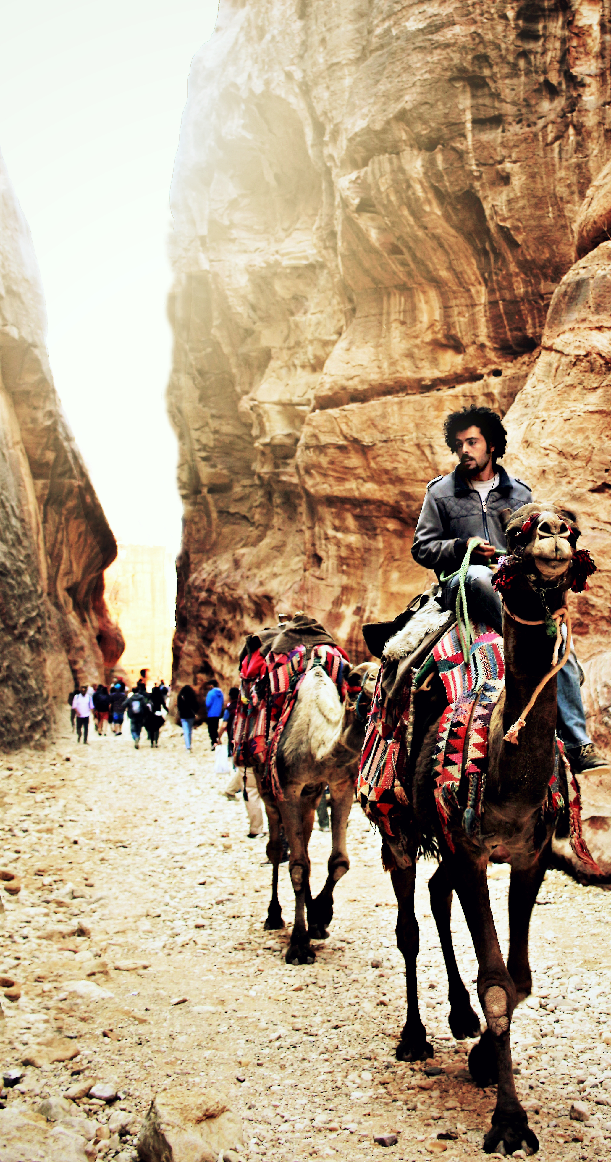A Bedouin and his camels