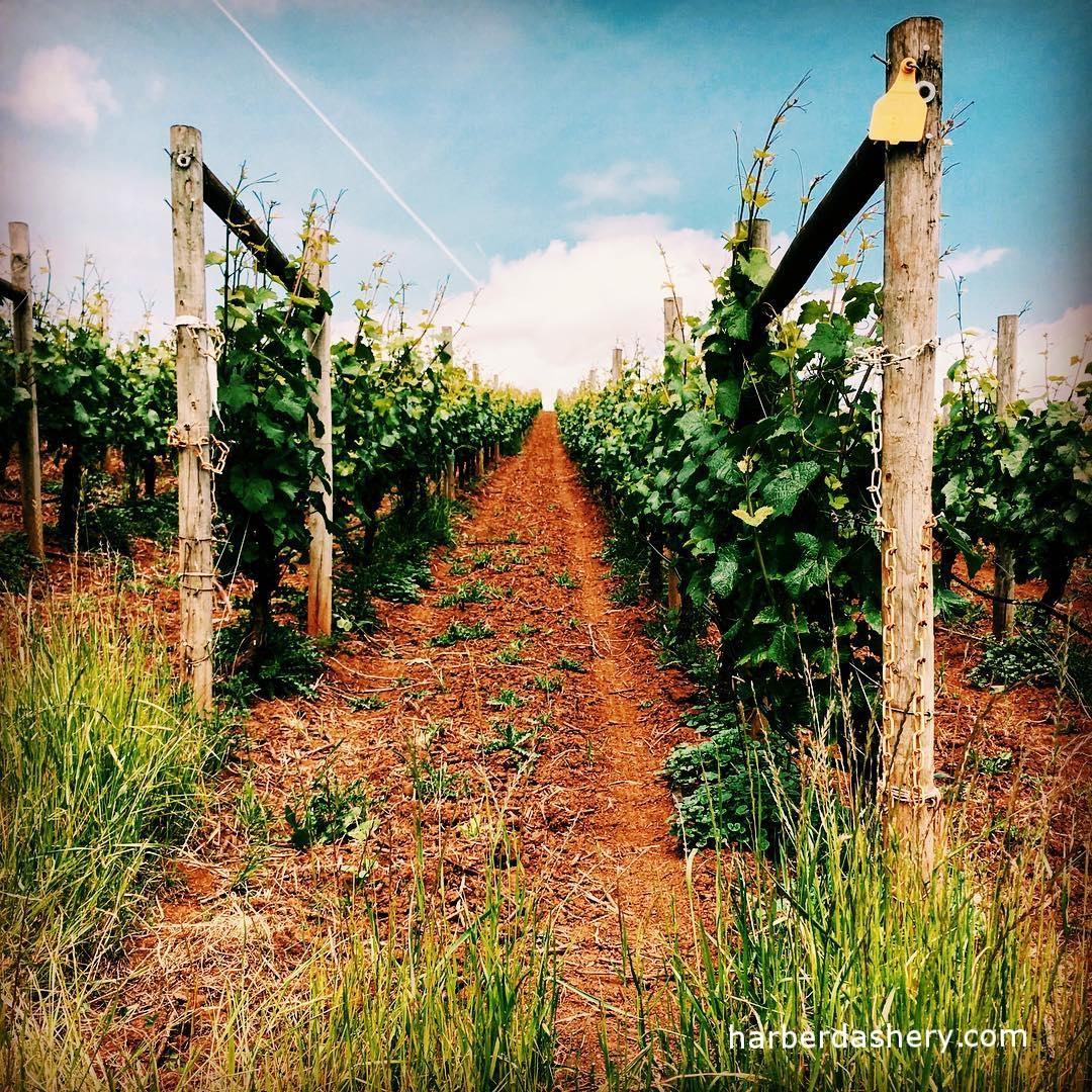 An Oregon Winery