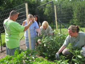 constructing a trellis for tomatoes