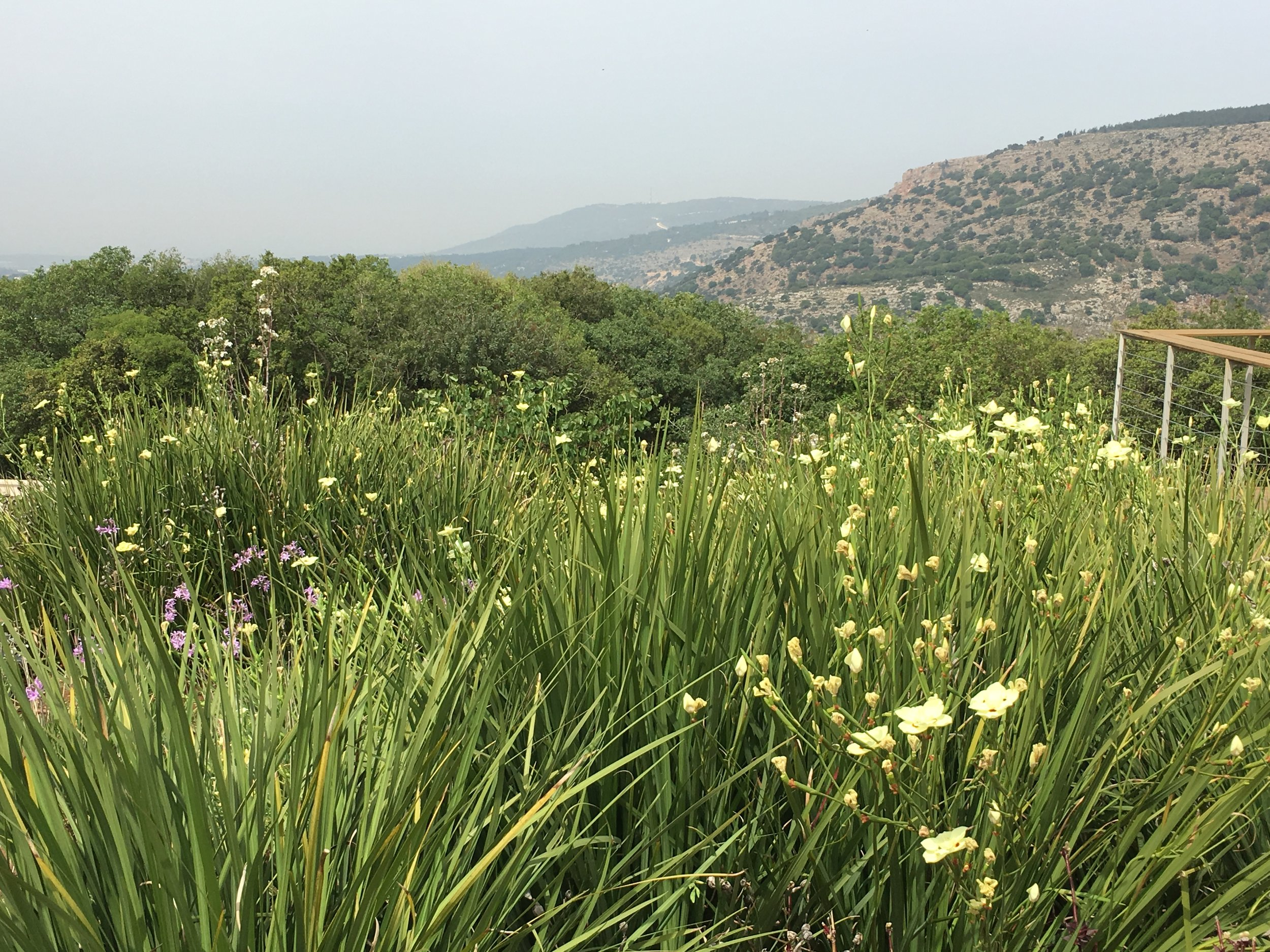 Spring in the Golan Heights