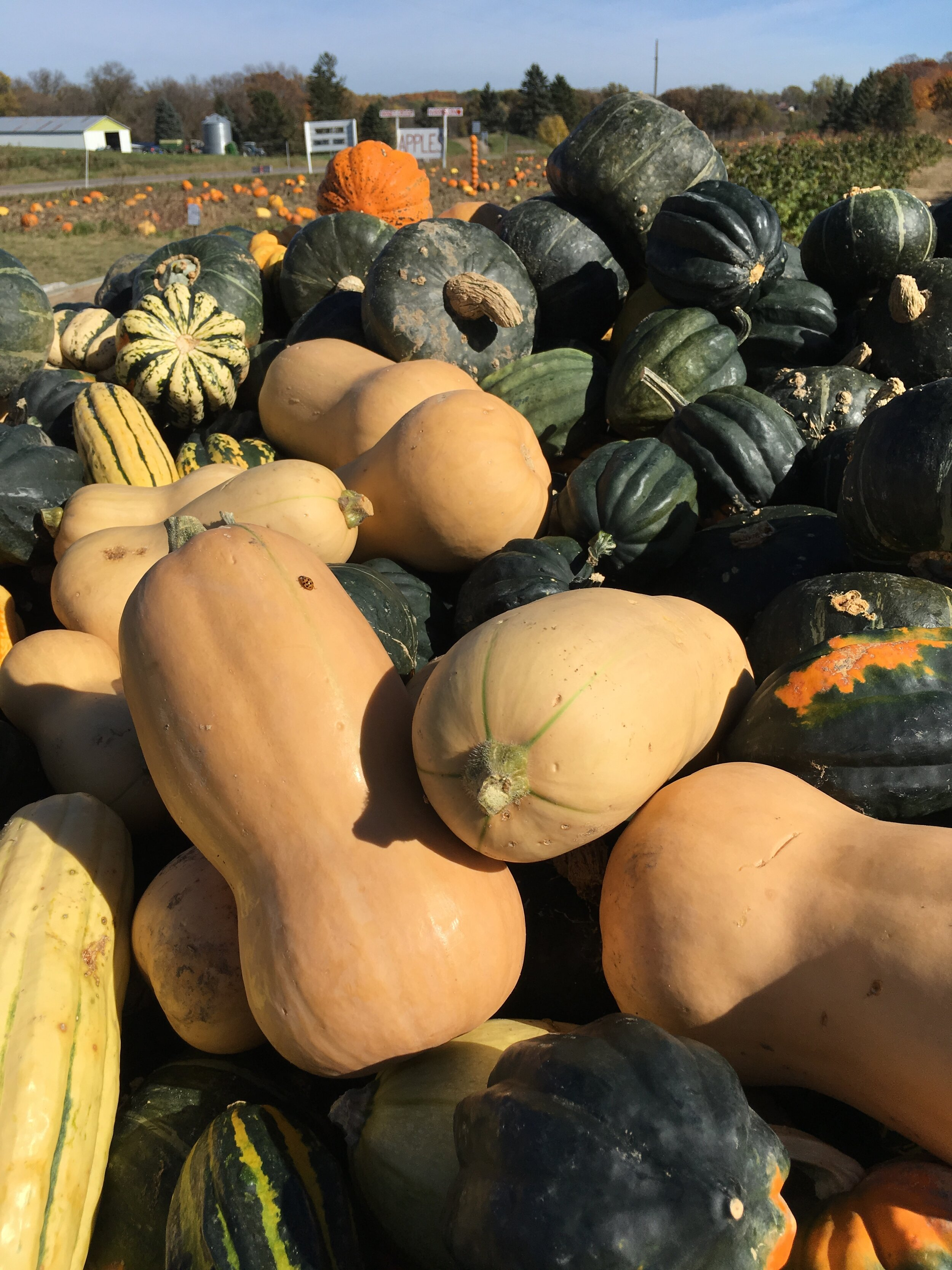 Pumpkins, pumpkins, everywhere…