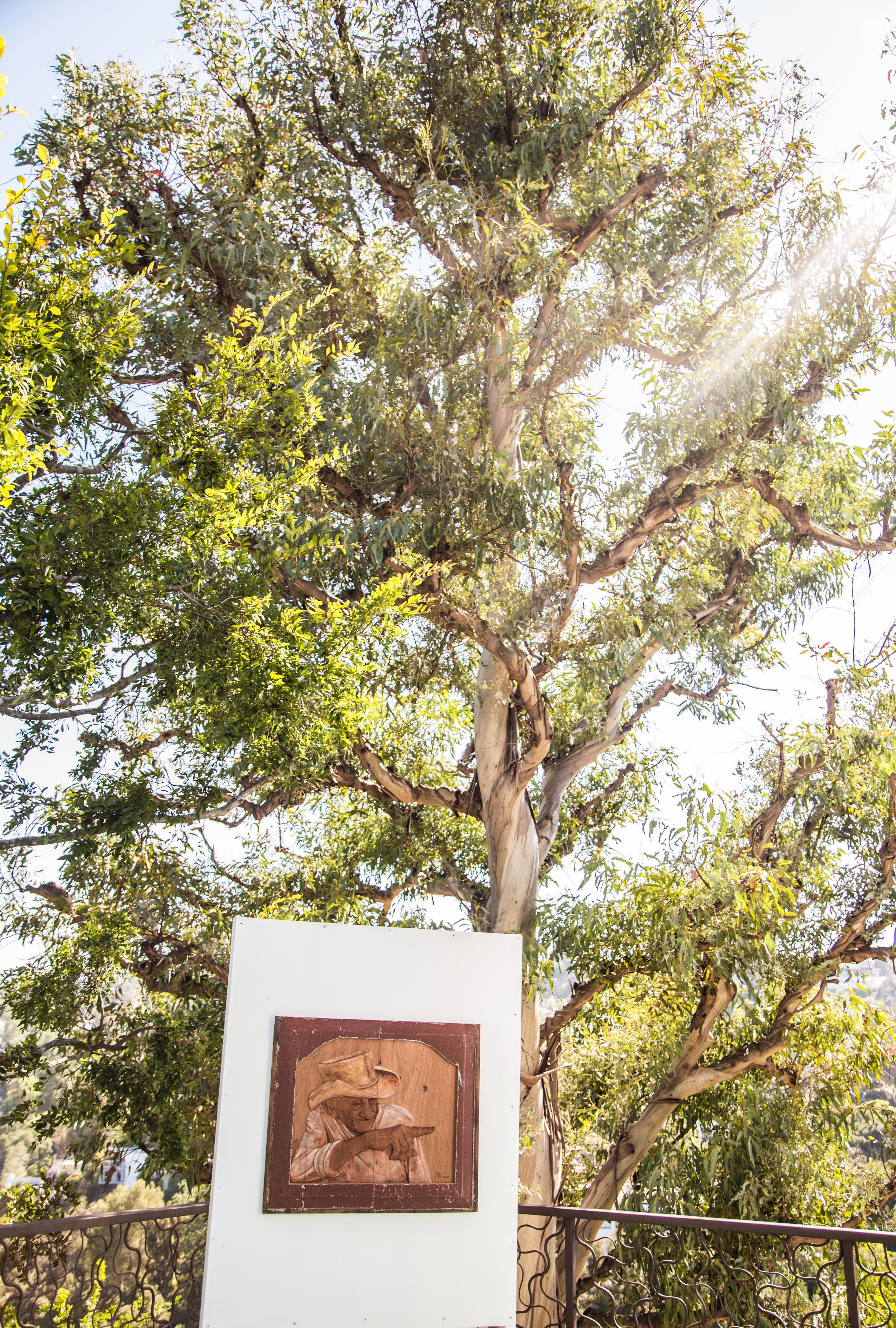 pepe tree.jpg