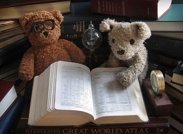 bears learning