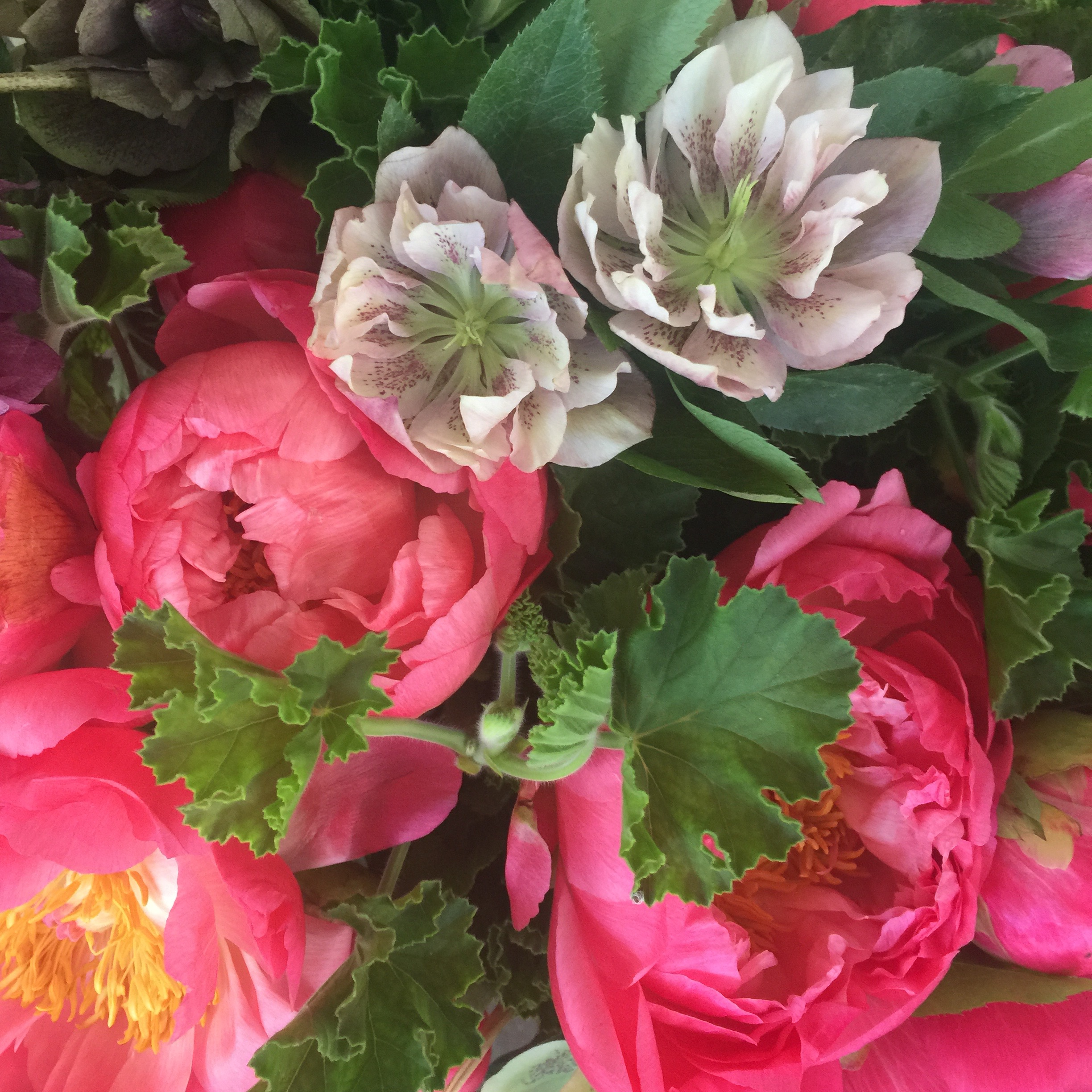 Gift offer of peony, hellebores and scented geranium