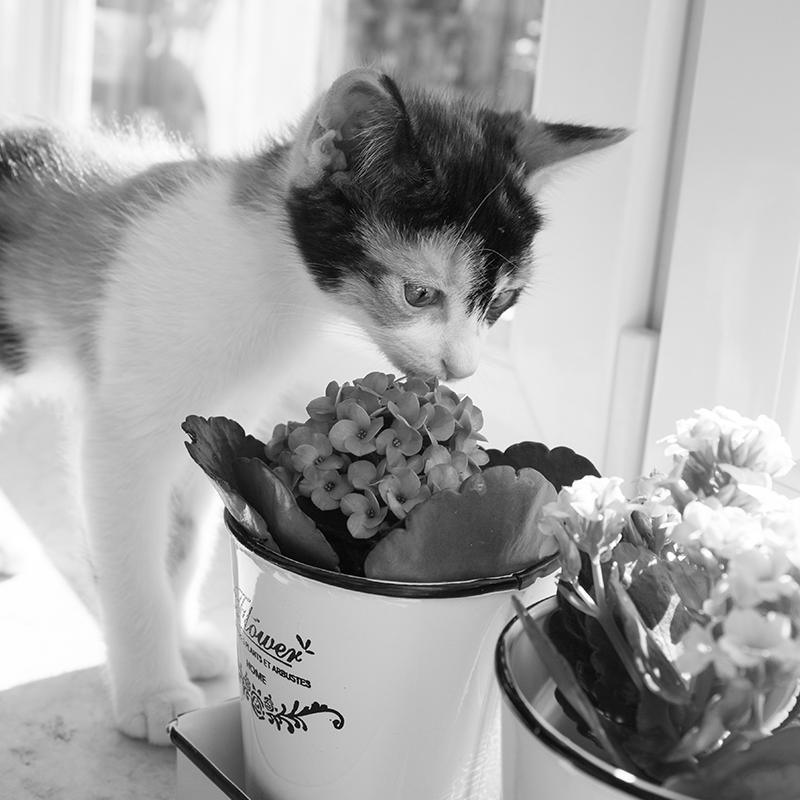 cat-877108.jpg