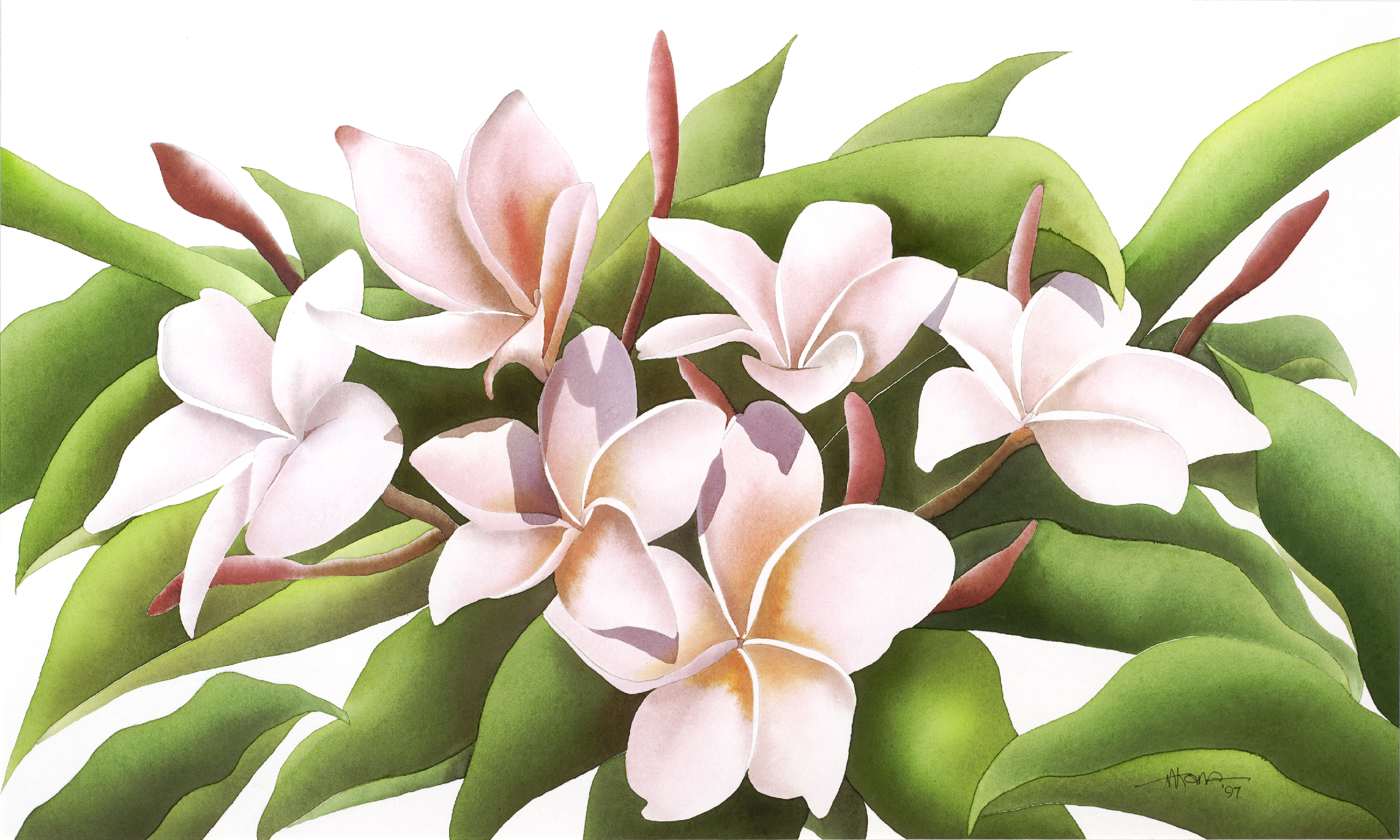 Sweet Smell of Plumeria