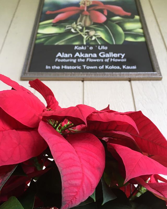 ANNIVERSARY OPEN HOUSE When you visit our open house on Sunday, December 30 (2-5 p.m.), the holiday decorations will still be up! Drop on by for live music and dancing, refreshments, door prizes and our big end-of-the-year sale! Most importantly, come and celebrate my anniversary – painting watercolors of Hawaii's flowers for 25 years!