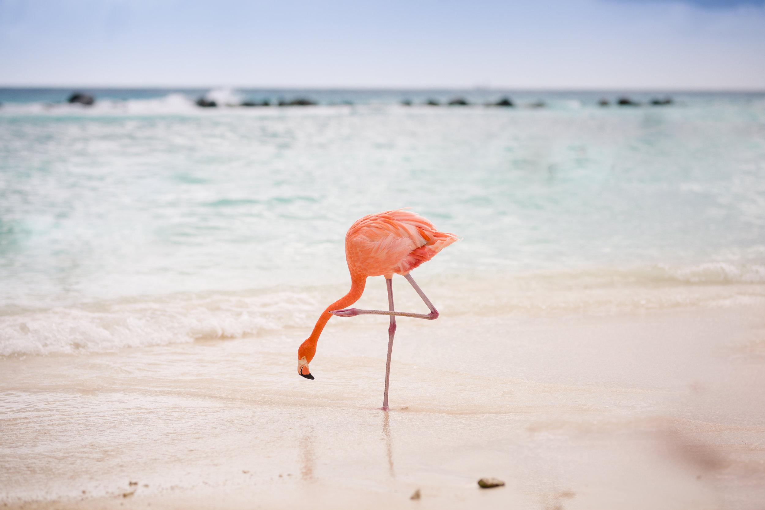 Aruba 2018-22.jpg