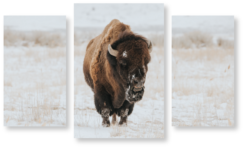 bison 3 piece.png