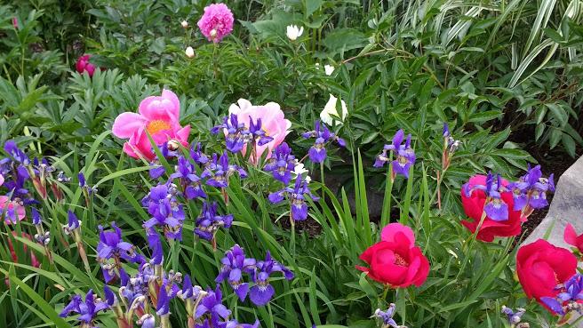 Peonies-Iris-More.jpg