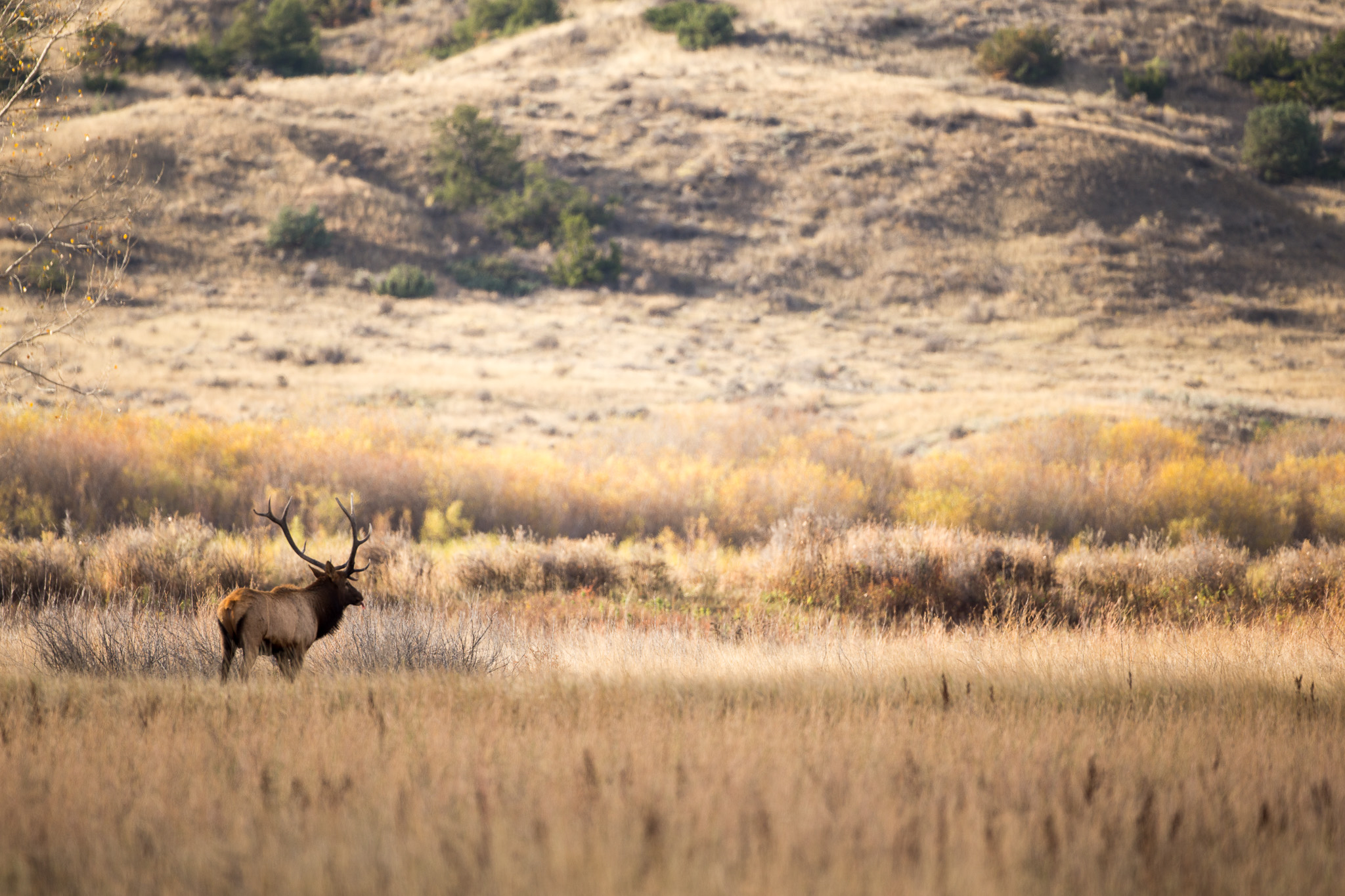 Western Hunt Company - Big Game Hunting at its Finest