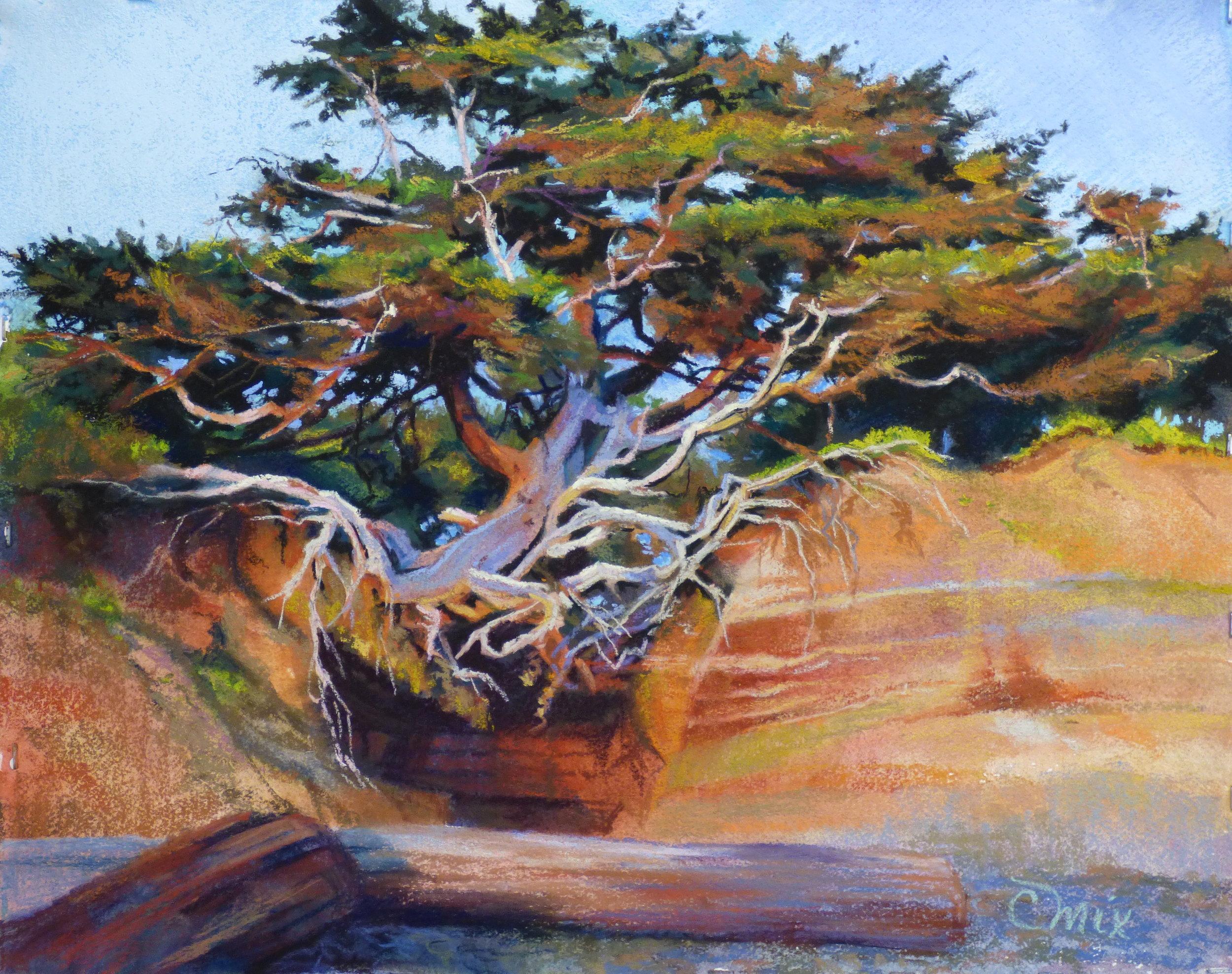 Tree of Life Kalaloch