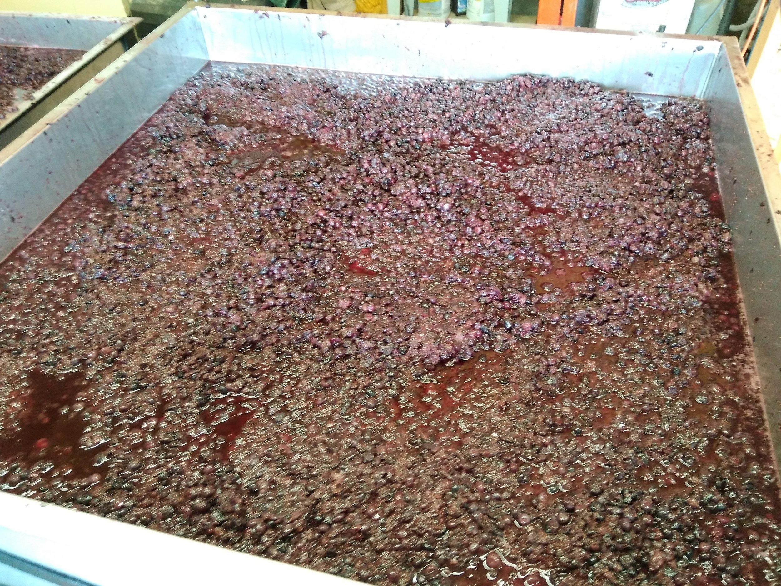 Crushed Blueberries in tank.jpg