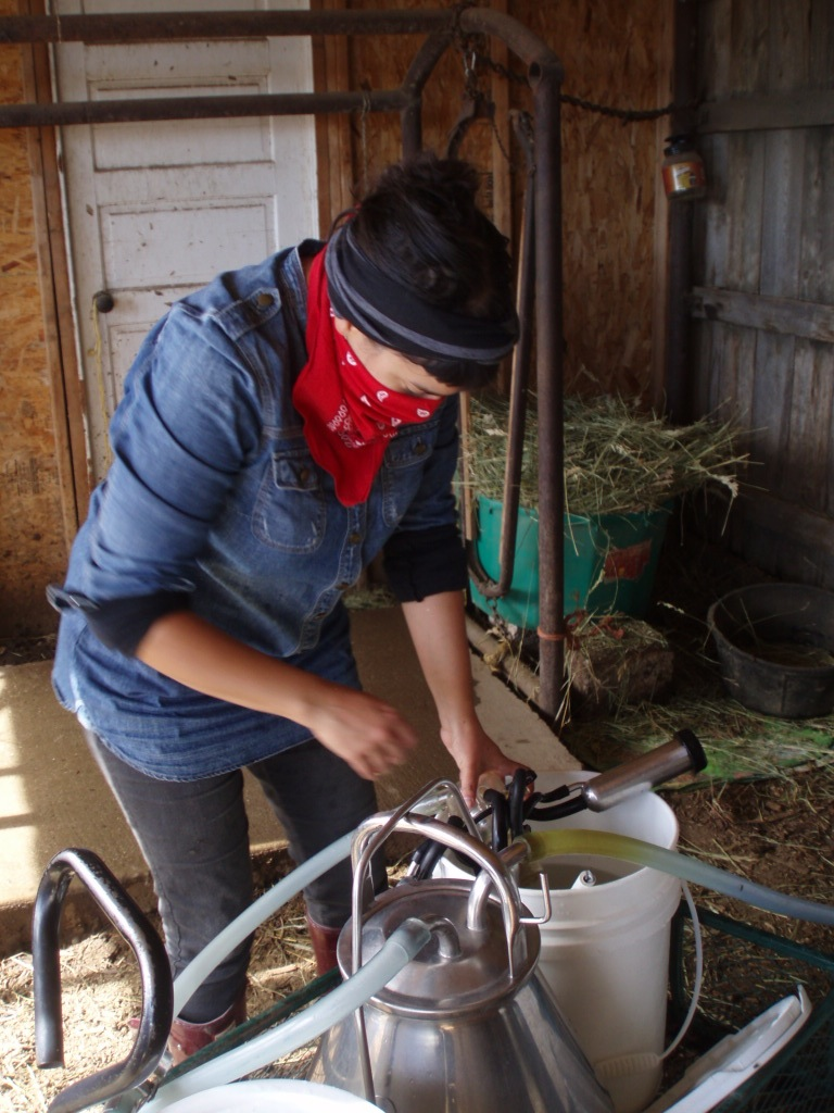 Cleaning the milk machine at the Becker Family Stock Farm, Wyoming