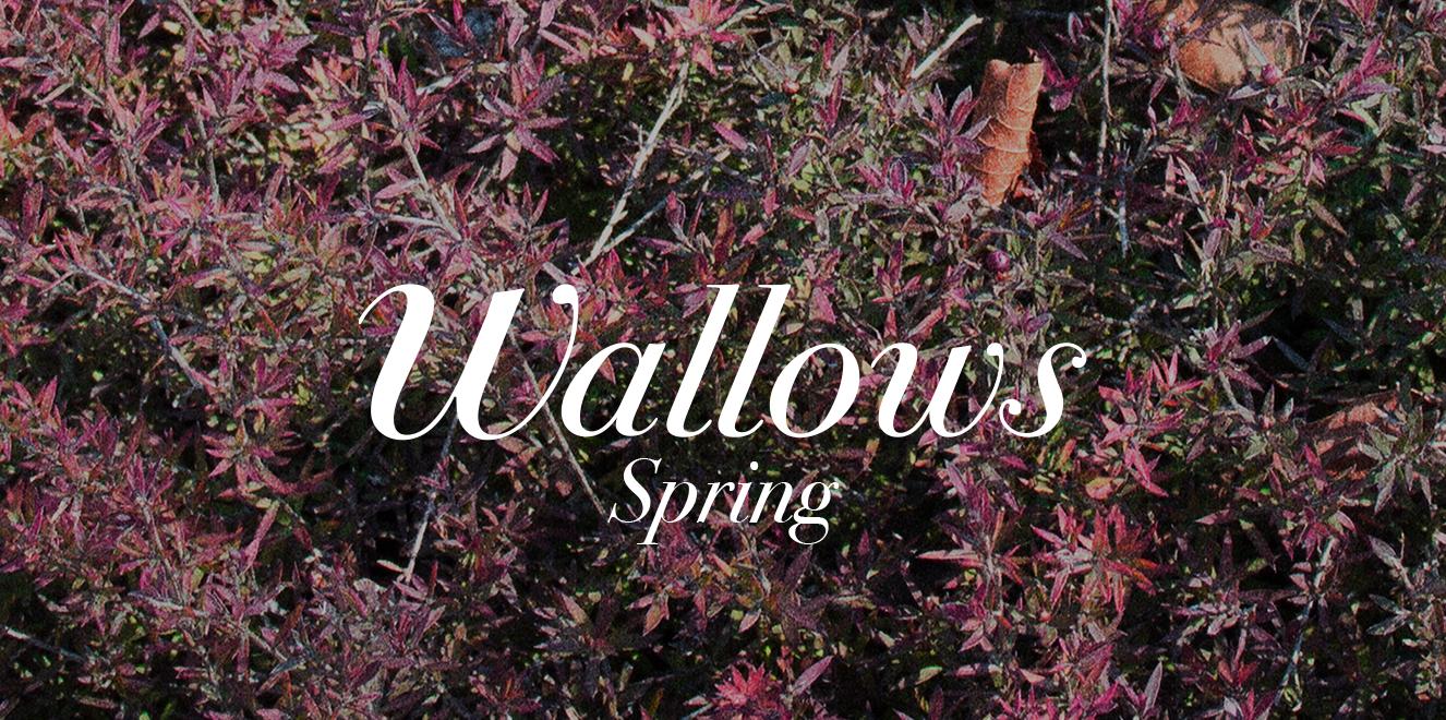 wallows.png