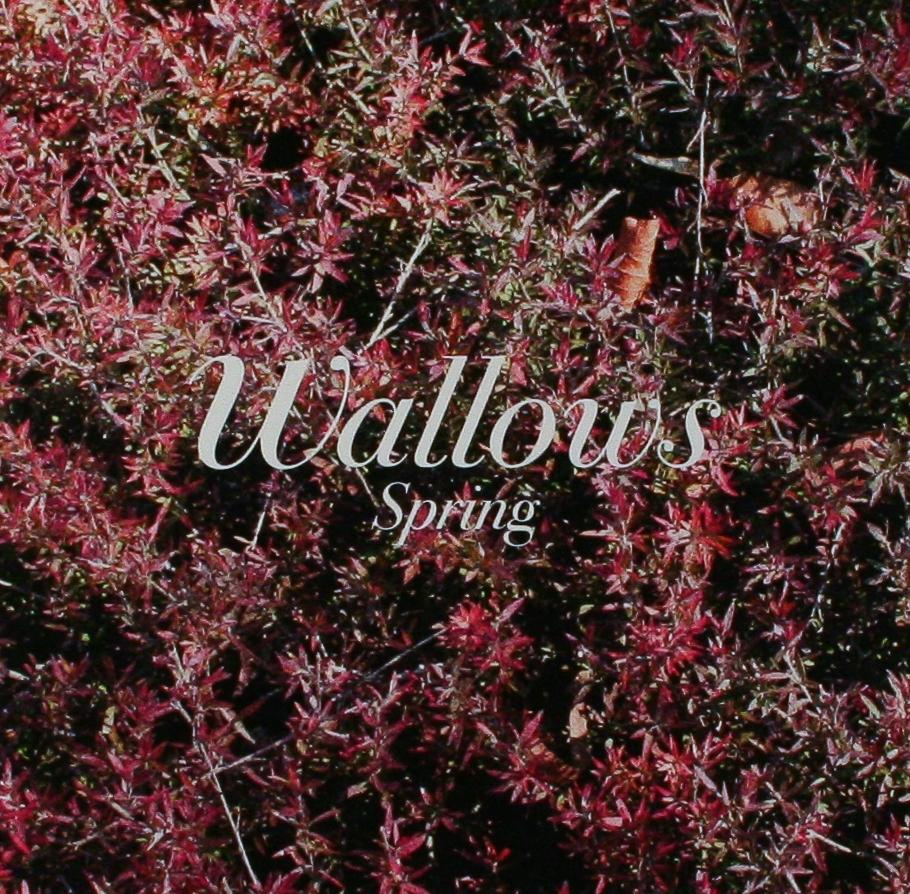 Wallows: New EP 'Spring'