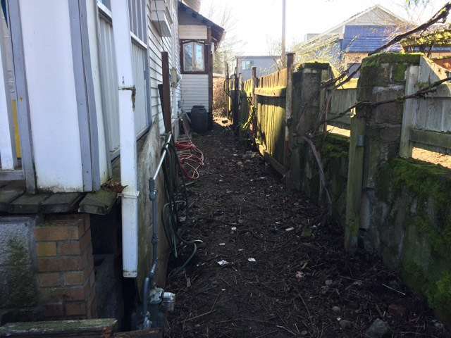 The side of the house and back of the house has been mostly cleaned up. The vines you see along this wall are grape vines. There are 4 established vines that we hope to save but they had to be cut way back to allow for re-building the fence that they are growing on.