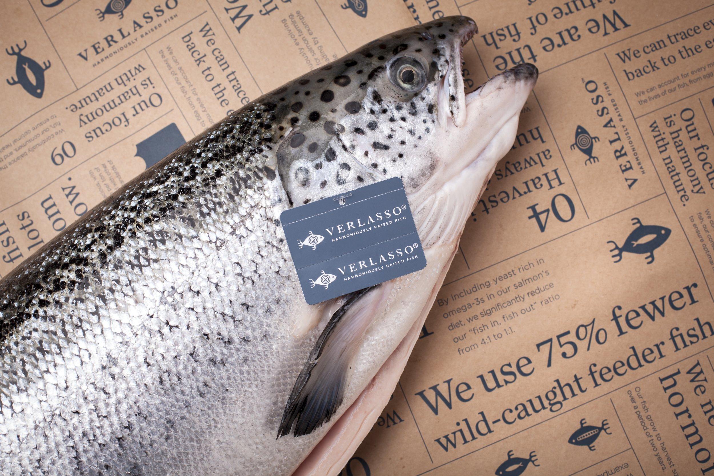 Verlasso salmon with tag