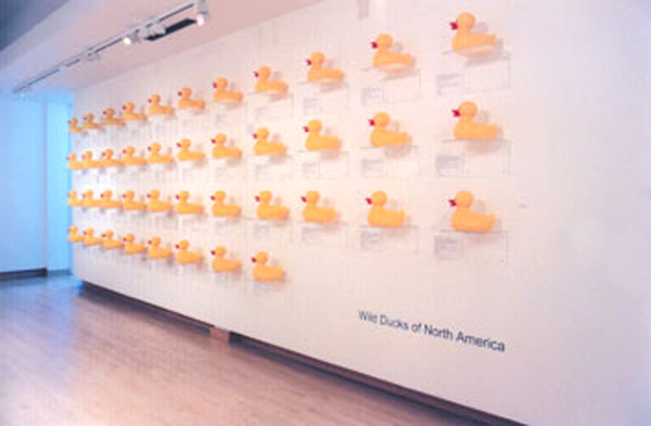 wild ducks of na - tectonic2.jpg