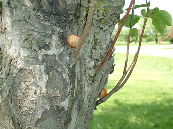 wisconsin squirrel convention6.jpg