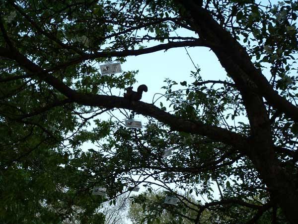 wisconsin squirrel convention3.jpg