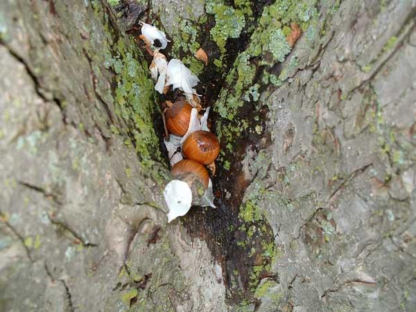 wisconsin squirrel convention7.jpg