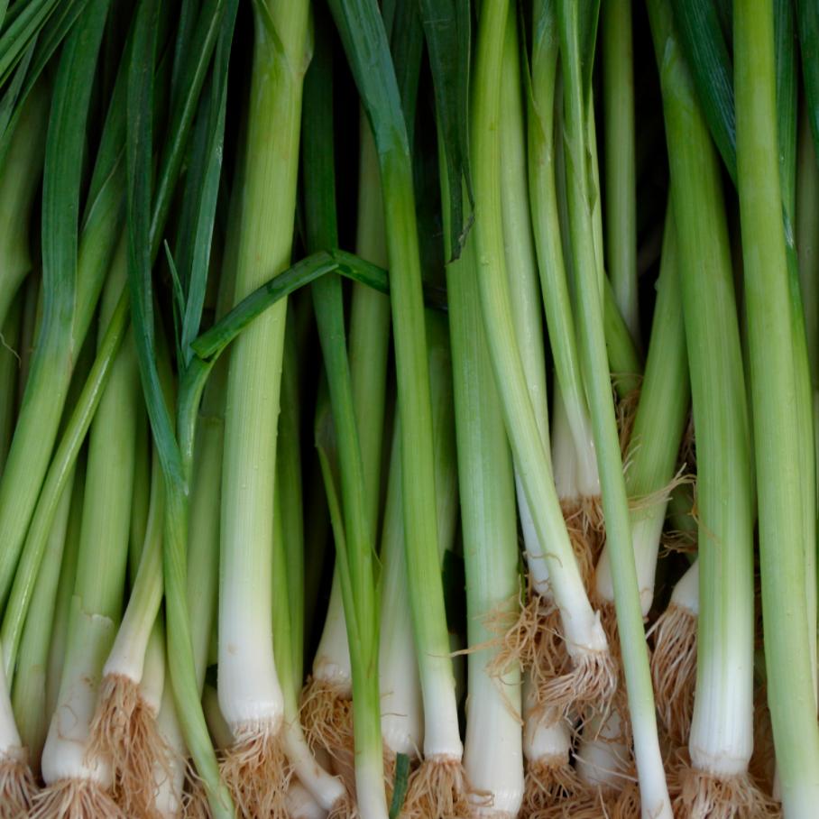 green onions -