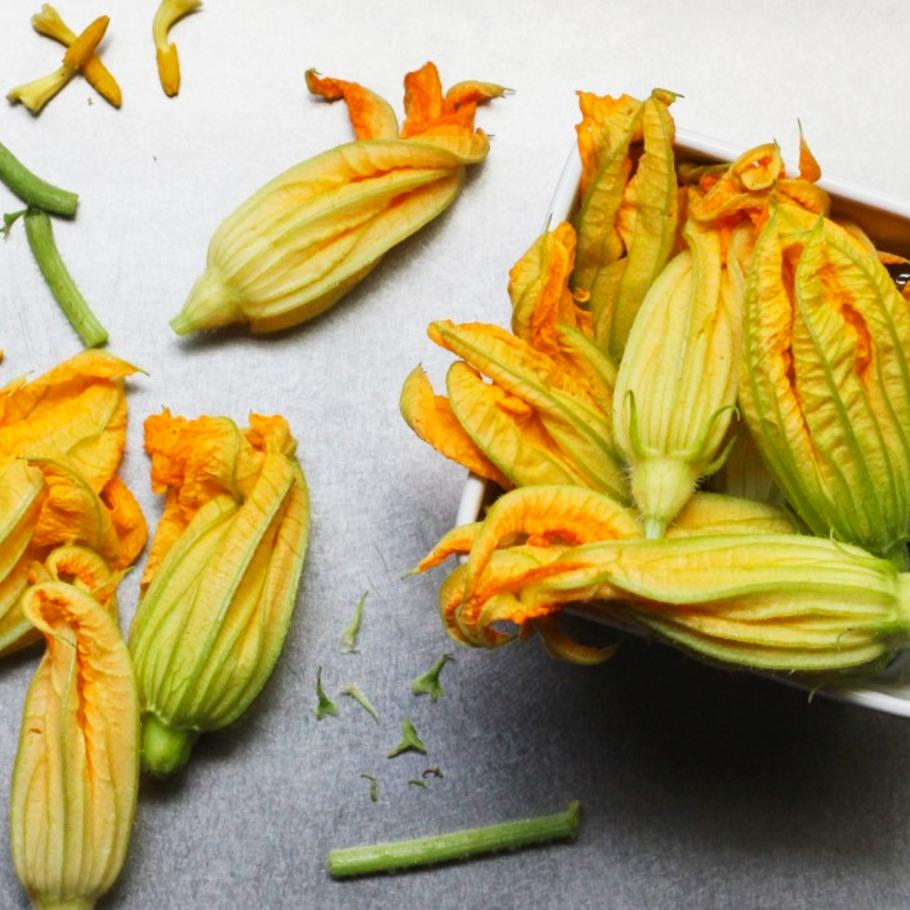squash blossom -