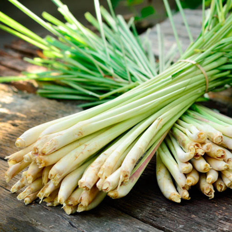 lemon-grass -