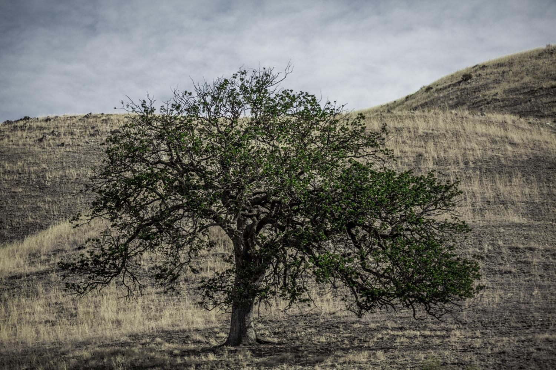 The Tree-1.jpg