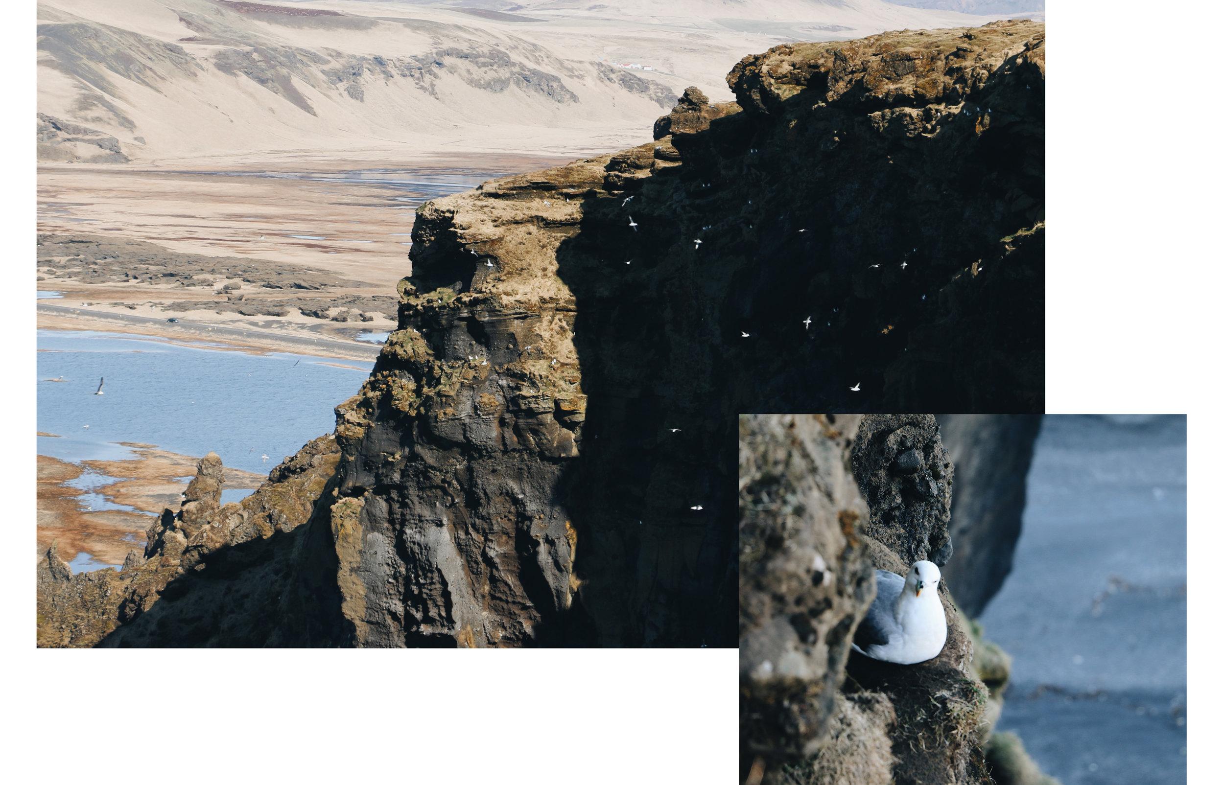Iceland Gull Cliffs.jpg