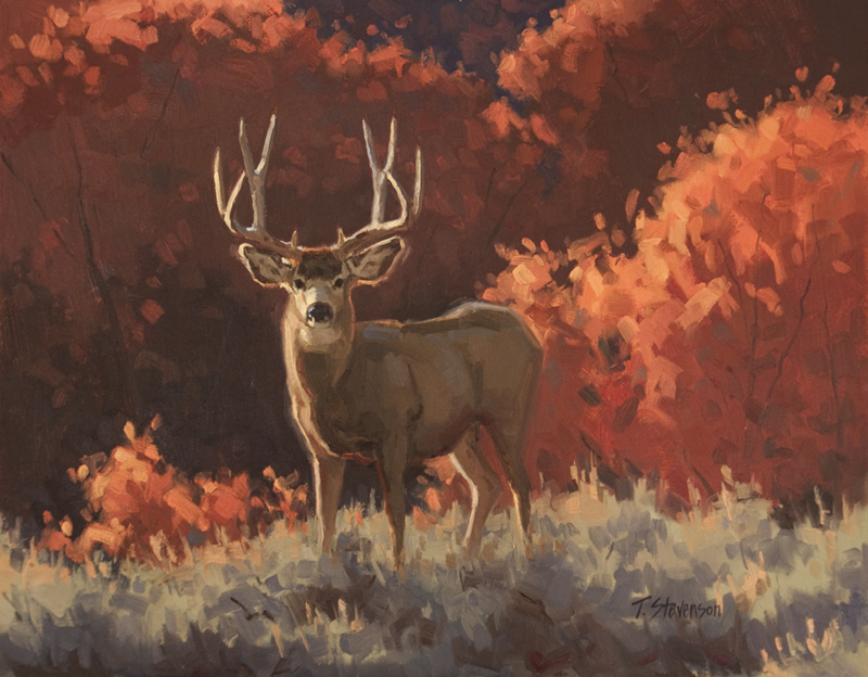 Mountain Maple Muley.jpg