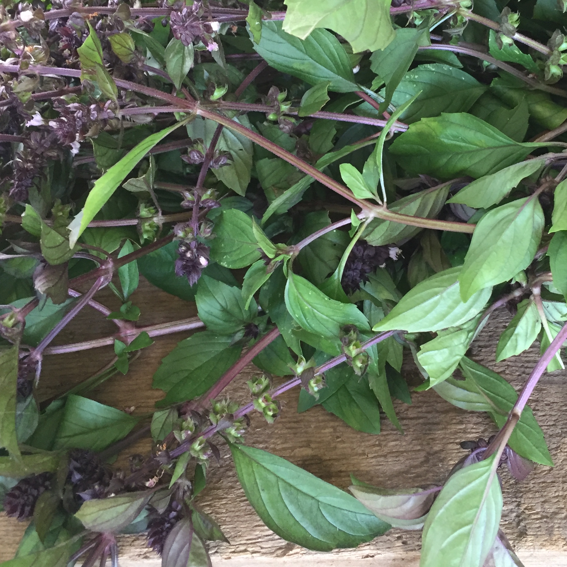 herbs.1.jpg