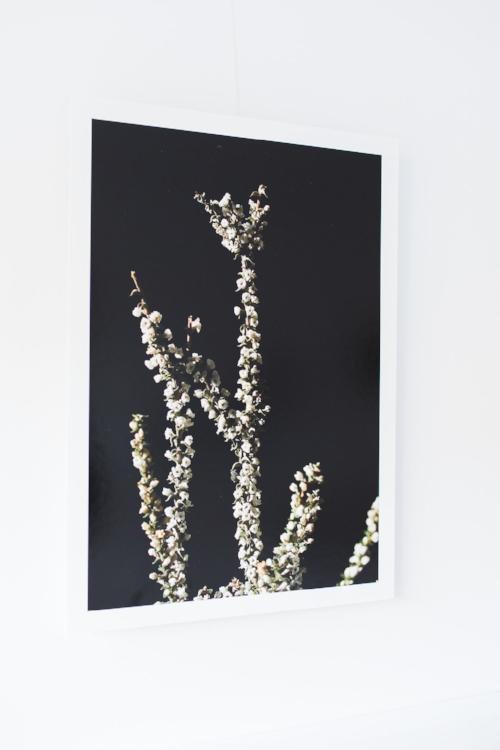 photographic prints $280