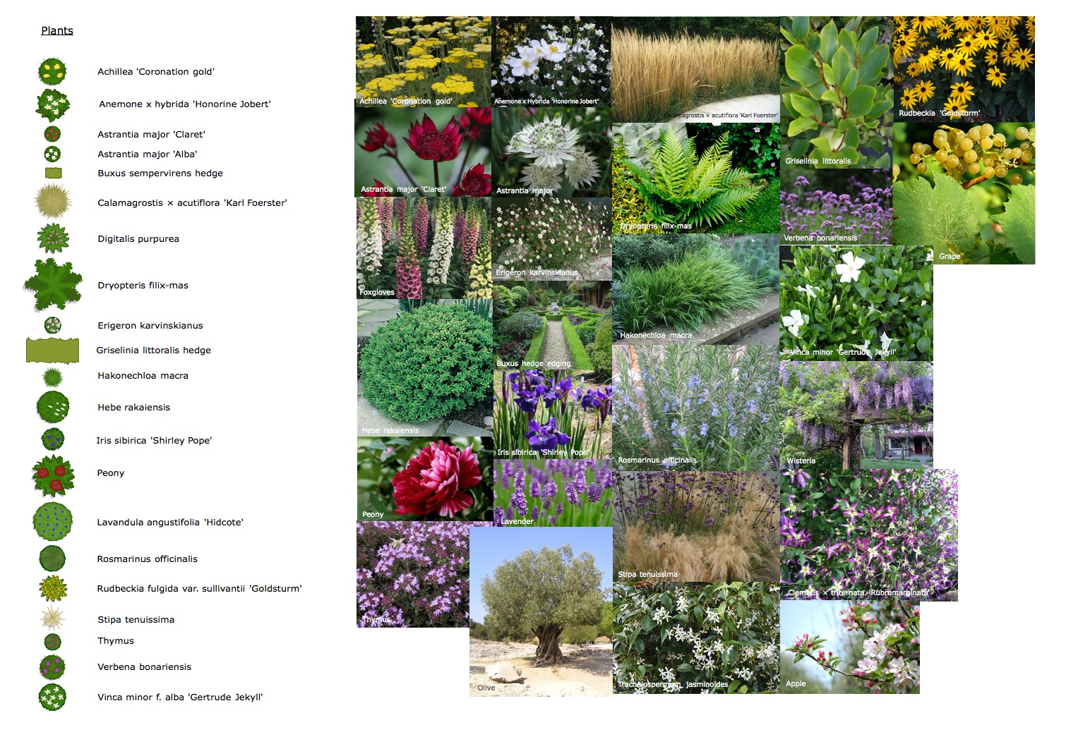 Bailey_plants.jpg