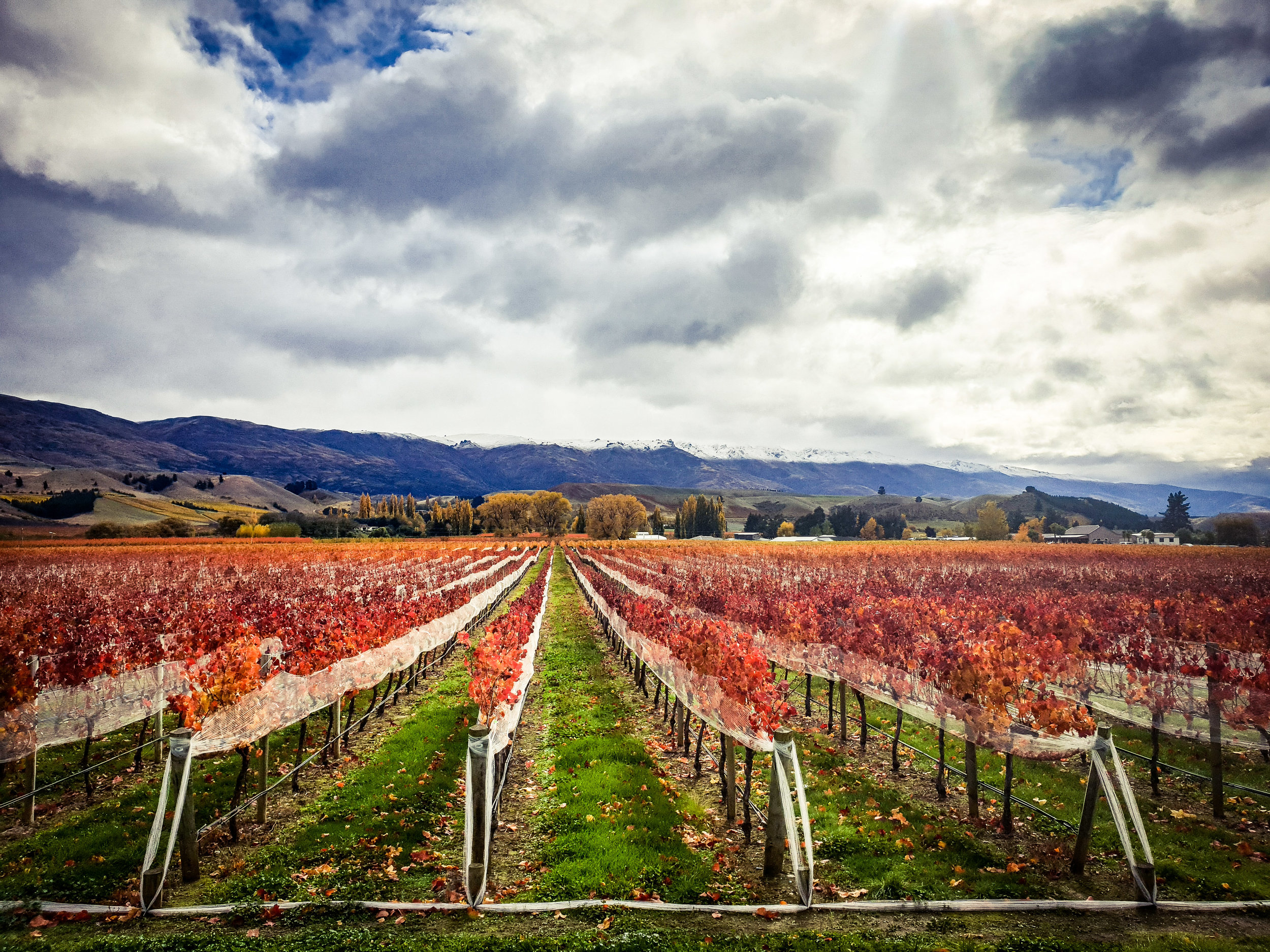 AUTUMN WINE TOUR