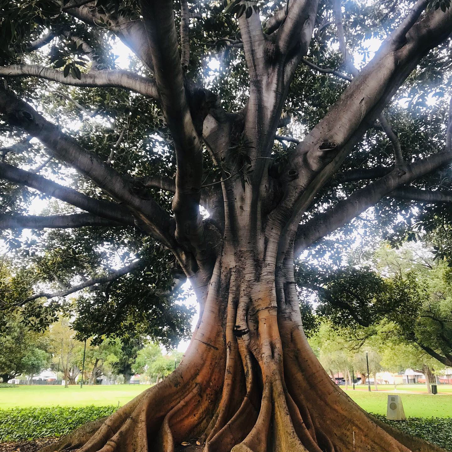 - Tree in Perth