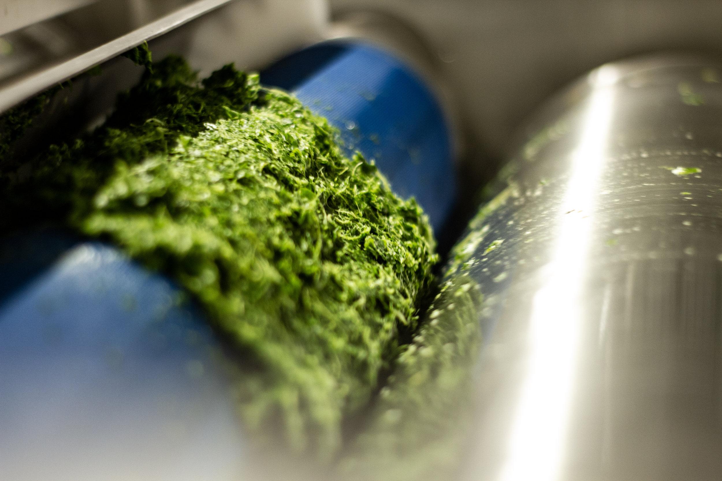 Die trockene Maische ist das was vom Rohstoff übrig bleibt, wenn der Saft ausgepresst ist.