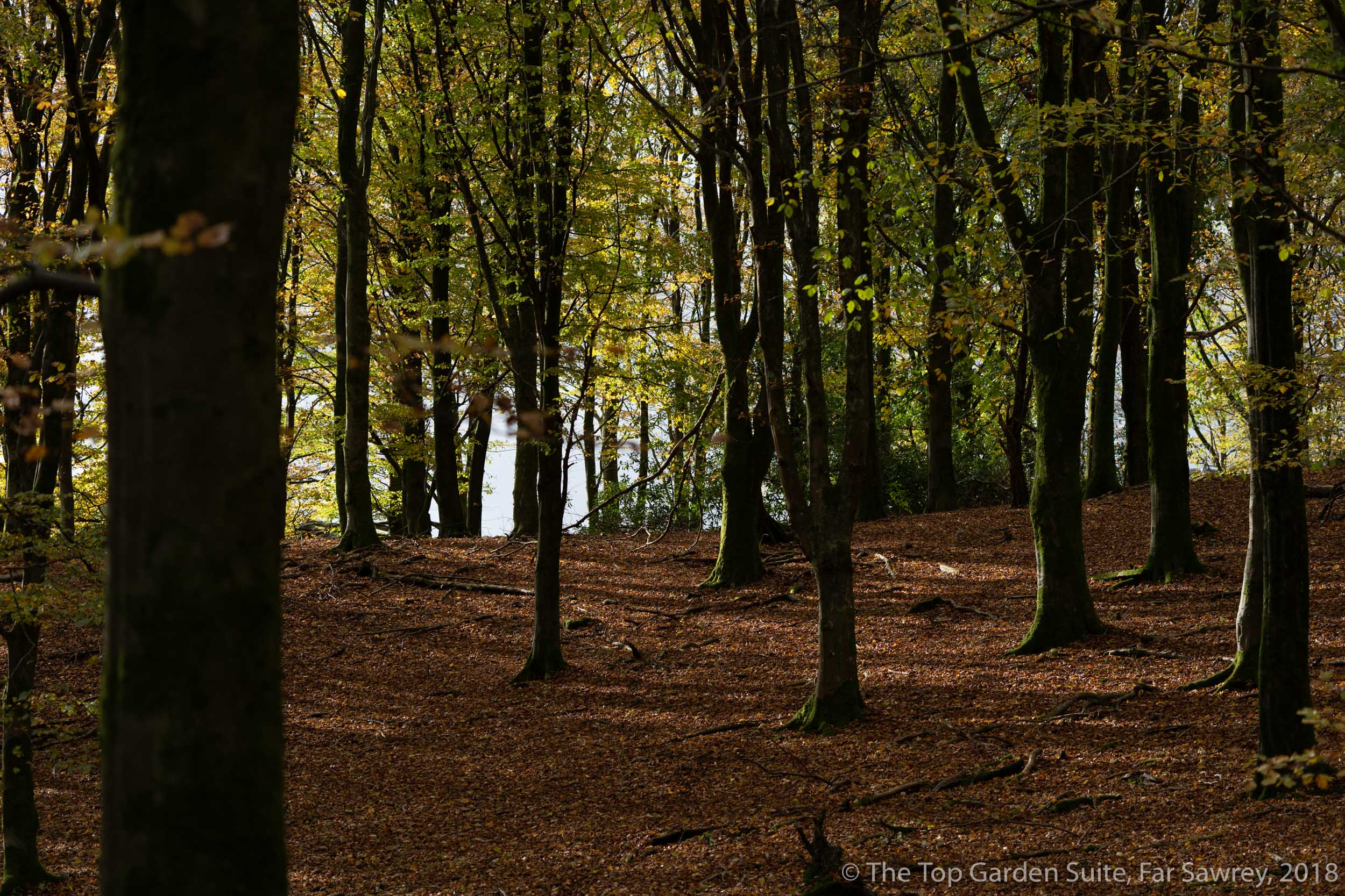 Woodland and fallen leaves at Bryers Fold