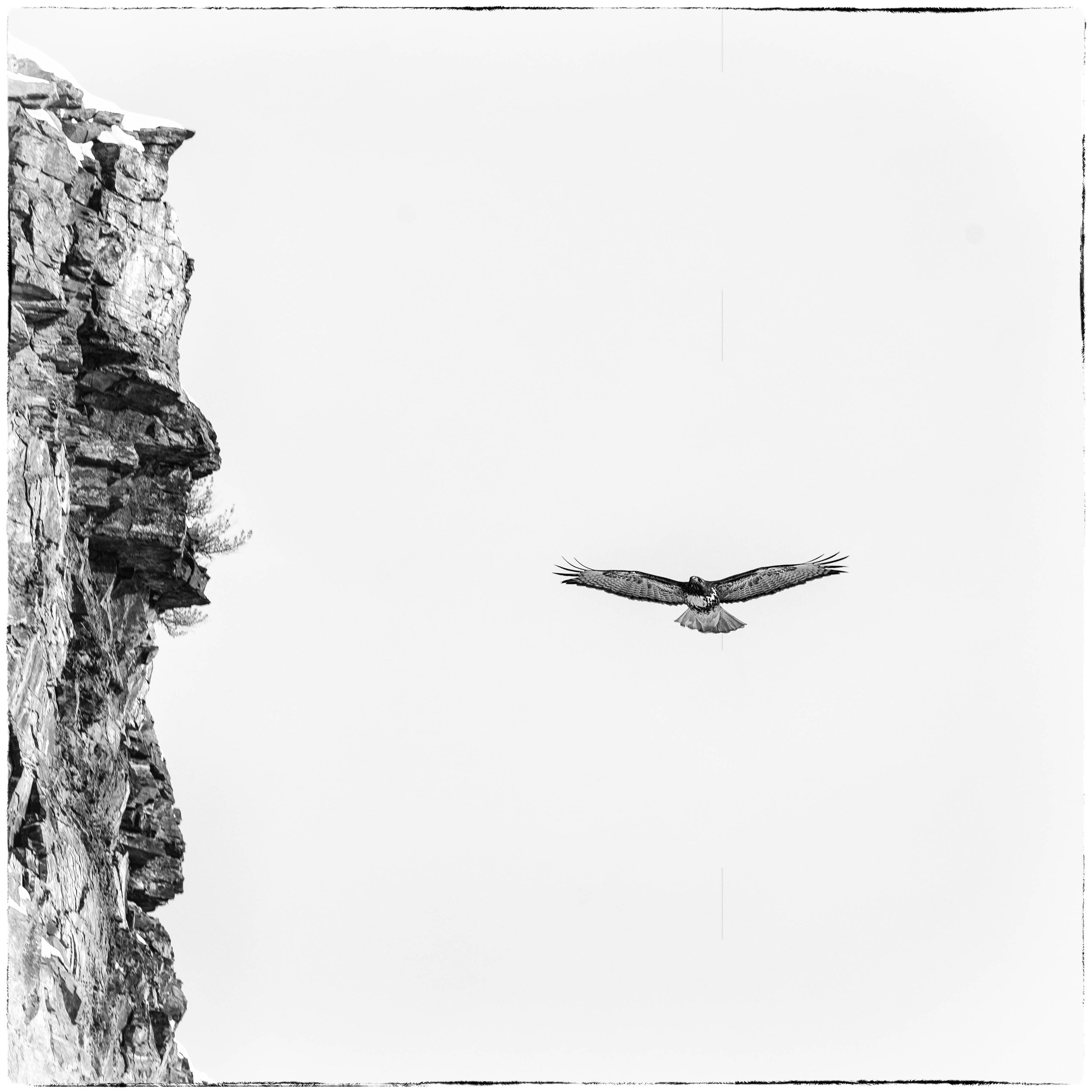 Hawk Cruises Cliffs
