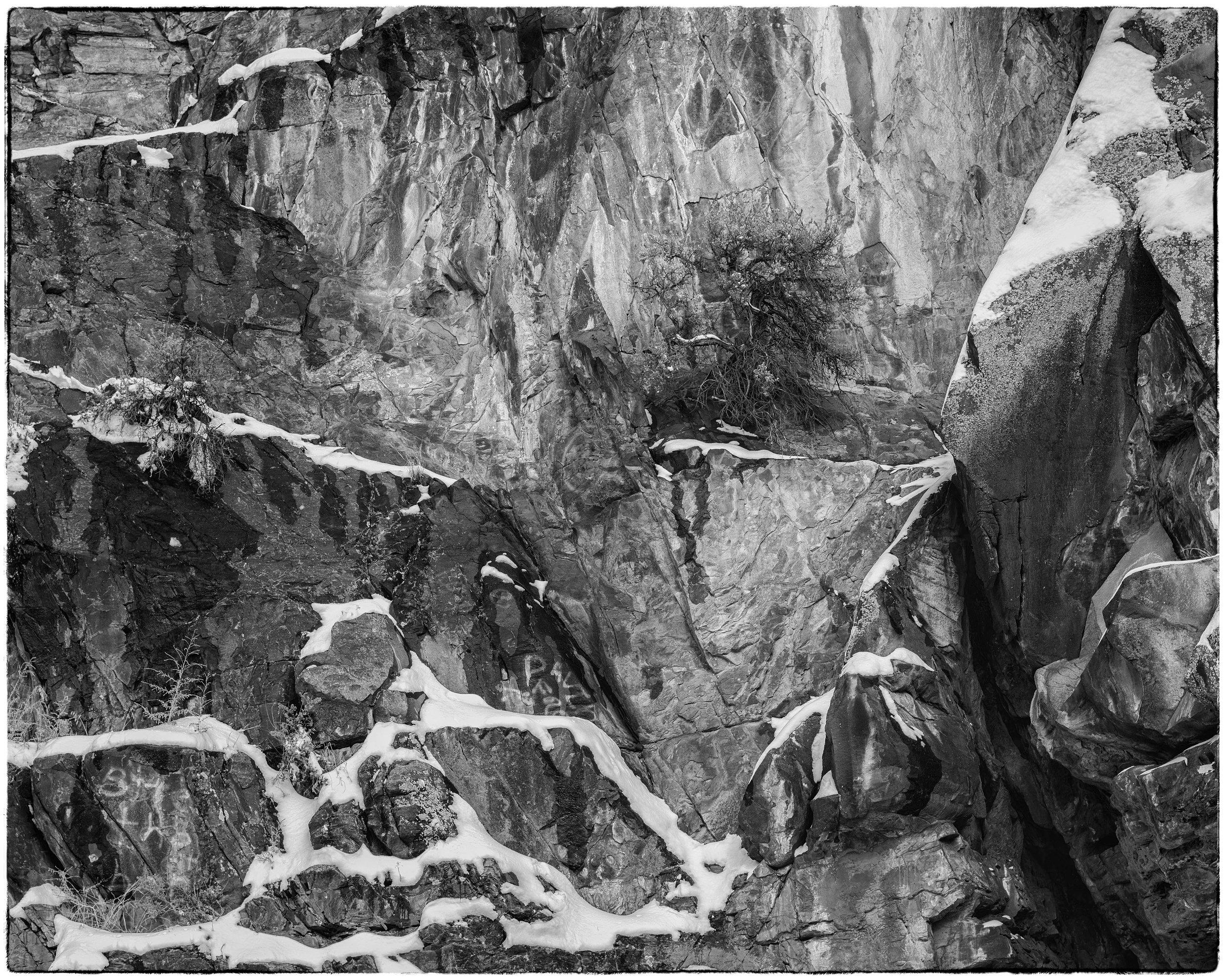 Sage on Cliff Face, Rattlesnake Bluff