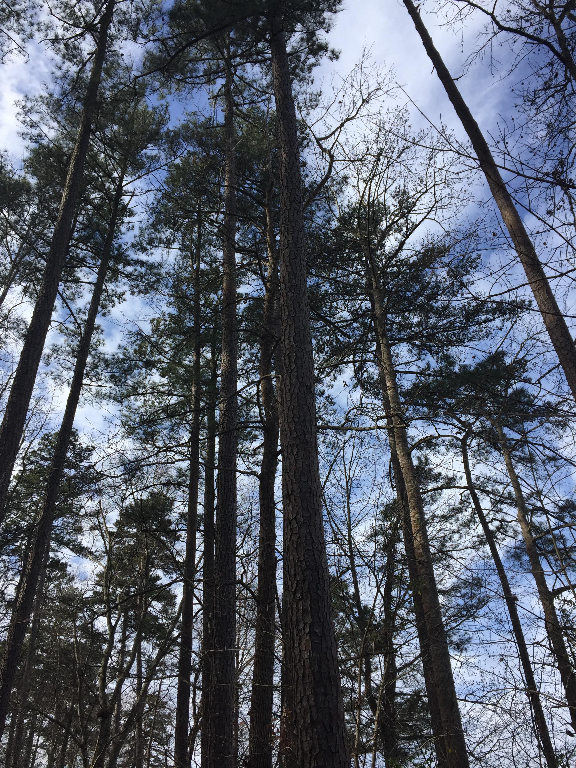 duke forest.jpg