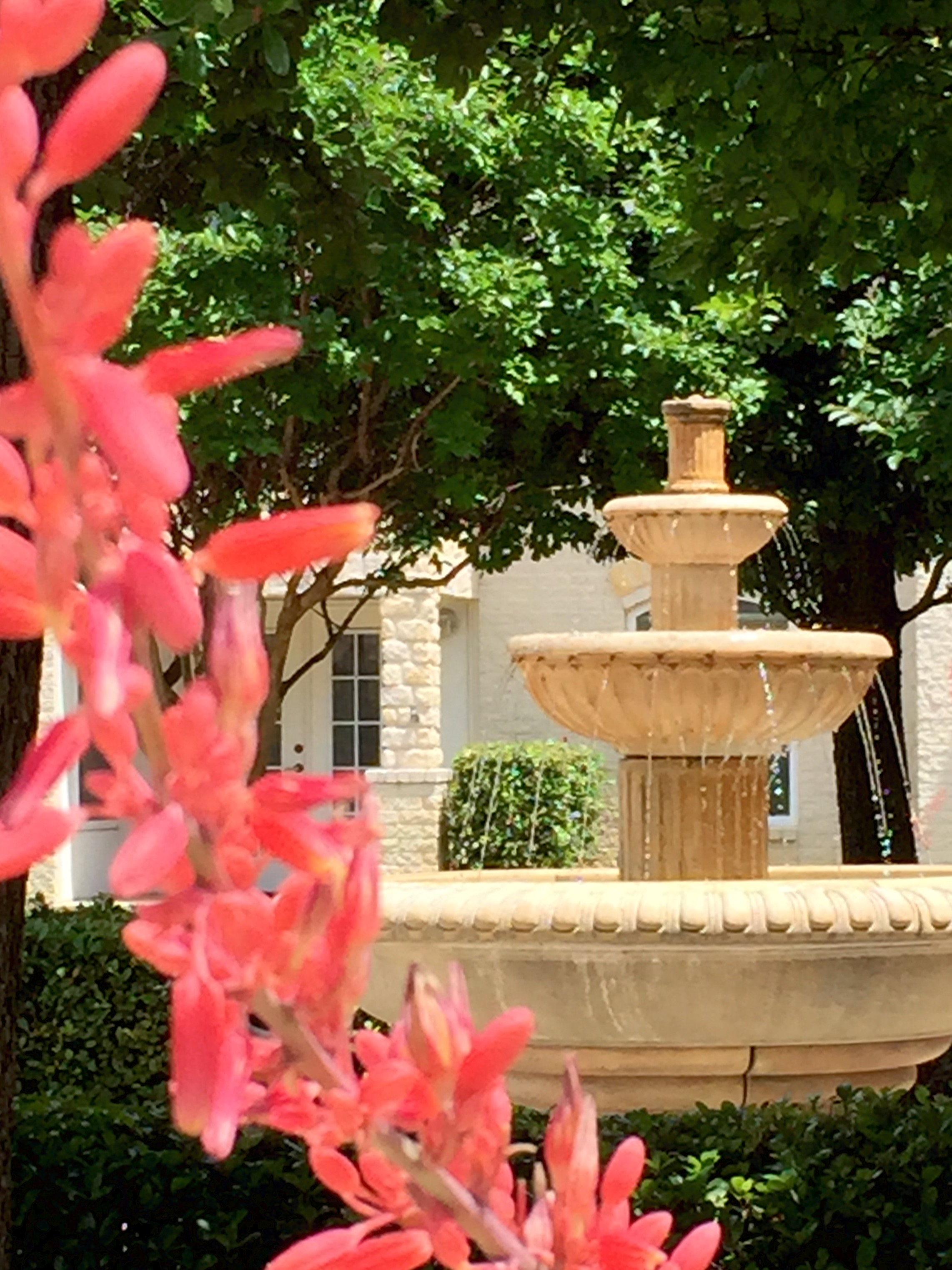 Fountain Flower Pict.jpg